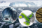 Antarktida zničí svět a přinese super antibiotika. Otázka je, čeho se dočkáme dřív