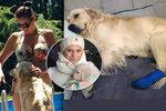 Ornella Koktová si prožila peklo: Strach o pokousaného člena rodiny!