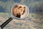 Radnice varovala houbaře před medvědem. Z toho se ale vyklubal pařez