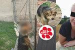 Týraný pes se oběsil, zaspaly úřady? Na řetězu trpěl celý život, majitelce hrozí jen pokuta