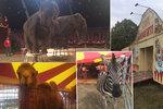 """VIDEO: Vyhrožování cirkusákům: """"Jen týráte zvířata!"""" V Praze lidem předvedli, že nikoho netrápí"""