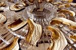 Jak správně sušit houby v sušičce? Je to překvapivě snadné a levné