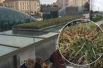 Tramvajovou zastávku na Hradčanské osázeli rostlinami: Cestující to ocení hlavně v létě, říká realizátor projektu