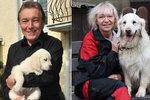 Žena, která má Gottova psa: Když Ivana Stellu přivezla, stalo se něco nečekaného!
