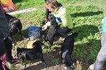 Týraní a zablešení: Veterináři v terénu se starají o psy bezdomovců! Ti se jich nechtějí vzdát