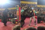Cvičený medvěd napadl krotitele: Lidé utíkali z cirkusu!