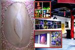 """Pestrobarevná zrcadlová výstava na Břevnově. Dominuje jí """"rozkvetlá vagína"""" mezi peříčky"""
