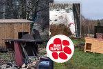 Fenka se štěňaty ve vaně, podvyživená zvířata. Veterináři zachránili psy z útulku hrůzy