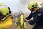 Tragický rozměr australských požárů: Zemřely tisíce koalů, téměř třetina jejich populace