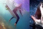 Žralok zabil Petra (†42) v Egyptě. Expert řekl, kde  jsou útoky predátorů nejčastější