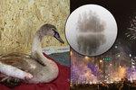 Mrtvý kocour, smrt labutě i zamořené Kladno. I to přinesly silvestrovské oslavy