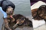 Bellu majitelé hodili do řeky s kamenem na noze: Fenka do poslední chvíle bojovala o holý život!