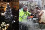 Vánoční strom na Staromáku pokáceli. Víme, proč ho odvezou do Brna
