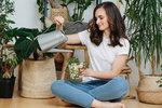 Jak se v zimě starat o pokojovky, aby vydržely do jara? Musíte ohlídat tyto tři věci!