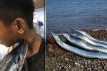 Ryba vyskočila z vody a probodla mladíkovi (16) krk! Zachránili ho při operaci