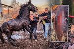Záchrana na poslední chvíli: Koně a psi ze zadlužené farmy nikdy nepoznali lidský dotek