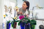 Nekvetou vám orchideje? Poradíme vám, jak o ně správně pečovat