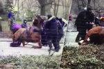 VIDEO: Kůň táhnoucí kočár zkolaboval před očima turistů! Aktivisté volají po zákazu