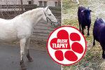 Týraná zvířata mají nové domovy. Kozy zbalkonu už se pasou, koně jsou ve státním