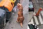 Muž kuriózně porušil zákaz vycházení: Odpadky vynesl v kostýmu dinosaura! Policie ho sebrala