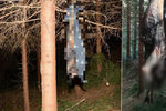 Po otřesném činu zbyl uprostřed lesa spálený pes: Starosta drsně promluvil o viníkovi