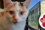 Teplické kočky bojují o přežití. Spolek zoufale shání půl milionu, jinak skončí na ulici