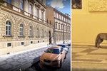 Divoké zvíře ve večerní Praze: V centru města lovila liška!
