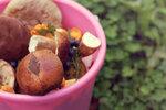 Sbíráte houby do igelitky nebo plastového kbelíku? Riskujete otravu