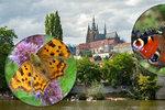Entomologové prosí Pražany: Pomozte nám zmapovat motýly! Stačí je vyfotit a nahrát do aplikace