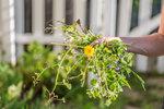 Vyžeňte plevel ze své zahrady. Tyto triky zabírají!