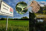 Zemřou vzácní ptáci a žáby? V Lysé trvají na likvidaci mokřadu, zuří místní i opozice