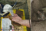 Hyena z Ostravy nechala nechtěného mazlíčka umřít v lese: Nemoralizuj, zpražila šokovanou kritičku