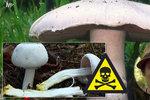 Poznáte jedlý žampion od jedovatého? Mykolog prozradil dva důležité znaky!