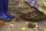 Houbařská sezona začíná: Kde rostou? Plus atlas jedlých, nejedlých a jedovatých hub