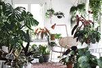 Tropický ráj v obýváku. Exotické pokojovky dodají domovu šmrnc