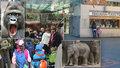Jedna z nejlepších na světě: Pražská zoo přežila druhou světovou válku, ničivé povodně i koronavirus!