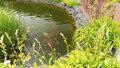 Policisté z Liberce vyšetřují neobvyklou krádež: Někdo upytlačil okrasné kapry z rybníčku na zahradě!