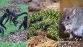 Na pokraji vyhynutí! Pražská zoo zachraňuje 191 druhů zvířat, mezi nimi i miliony let staré velemloky