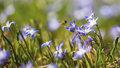 Louka posetá ladoňkami: Kvetou jenom 10 dní! Krásu hledejte v botanické zahradě