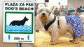 Dovolenou si užijí i psi. Kde je u moře čekají lehátka, bary a sprchy?