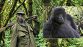 Pytláci zastřelili pět správců národního parku. V přírodě tam přežívají ohrožené gorily