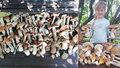 Prodlužte houbám život! 6 rad, jak na to