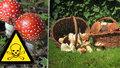 Konečně rostou: Pozor, co dáváte do košíku. Jedovaté houby mohou zničit ledviny i zabít