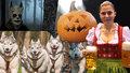 Tipy na víkend: Tupláky piva, halloween, voňavá posvícení i závod psích spřežení