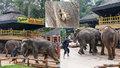 Zvrácený turismus: Pro potěšení lidí v zoo mlátí slony a bodají je do chobotů!