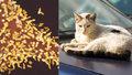 Pokousala ji toulavá kočka. Za injekci proti vzteklině chtěli po ženě téměř milion
