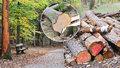 Kunratický les se mění v hřbitov stromů. Prázdná místa vyplní listnáče, jsou odolnější