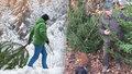 """""""Smrádek"""" má odradit zloděje stromků. Lesníci drží před Vánoci hlídky i v noci"""