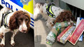 Roztomilý pes je postrach pašeráků! Na jeho hlavu vypsali 750 tisíc odměnu