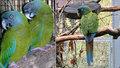 Honzovi uletěl papoušek za 70 tisíc. Případ na Pardubicku šetří i policie